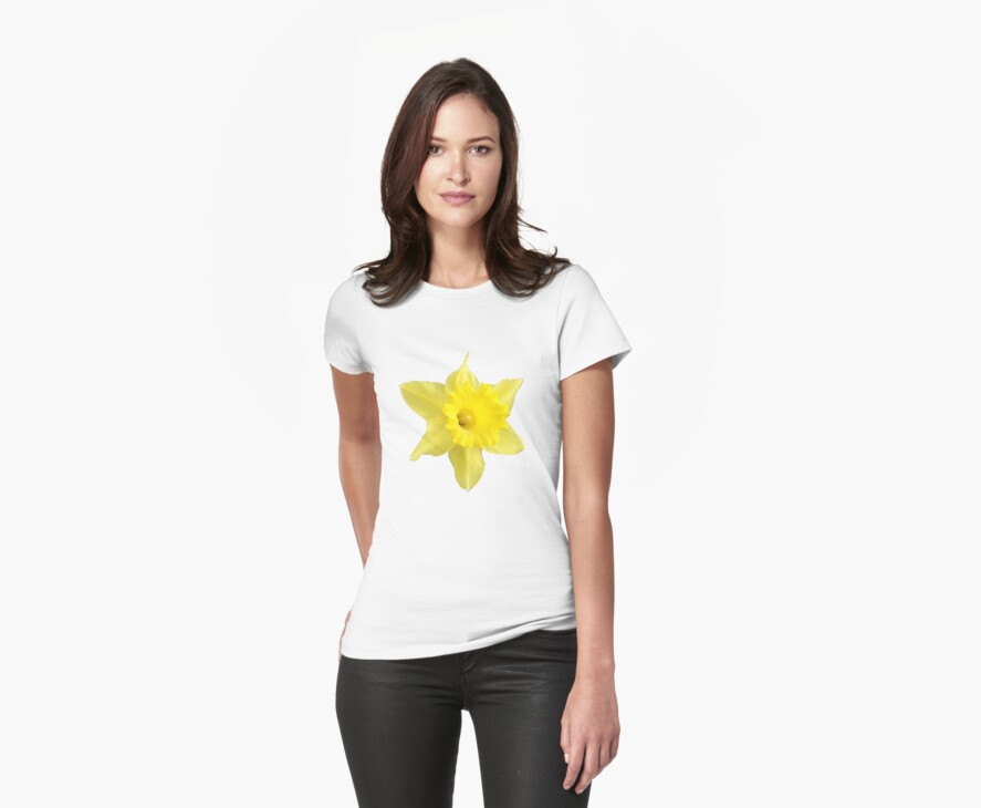 Yellow Daffodil by Stephen Willmer