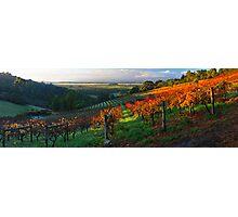 Windy Ridge Winery Photographic Print