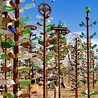 Bottle Trees Exposed! by photosbyflood