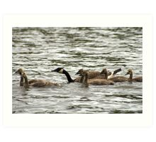Flock on the Water Art Print