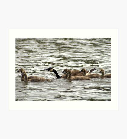 Flock on the Water Art Print
