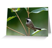 Chickadee in Sweet Olive Greeting Card