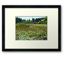 Beaver Lake Framed Print