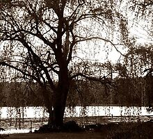 Weeping Willow by Renee Keener