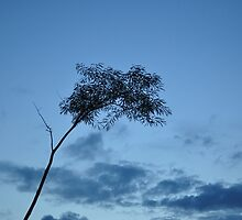 blue evening by fahad23