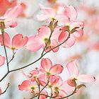 Signs of spring by SylviaCook