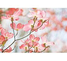 Signs of spring Photographic Print