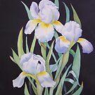 White Iris by Teresa Boston