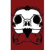 Owl Skull on Sanguine  Photographic Print