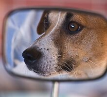 How much is that doggy in the Mirror by Claire  Farley