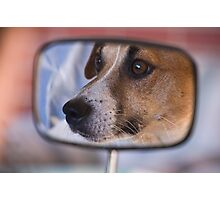 How much is that doggy in the Mirror Photographic Print