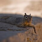 Nutz hiding in the shade by Jason Jaynes