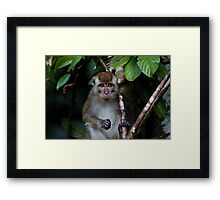 Long-Tailed Macaque Framed Print