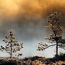 4.5.2015: May Morning Magic I by Petri Volanen