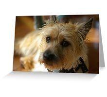 Adorbz Cairn Terrier Greeting Card
