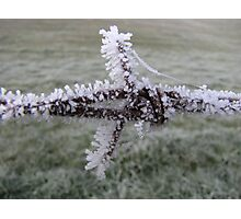 Ice covered barbed wire Photographic Print