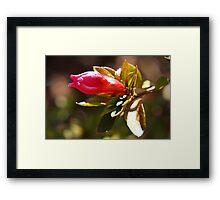 Pink flower bud Framed Print