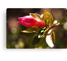 Pink flower bud Canvas Print