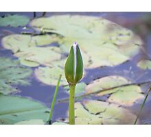 Singled out Photographic Print