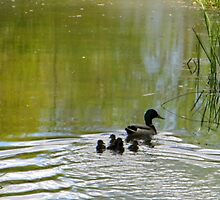Ducklings with Dad, go to the light. by ienemien