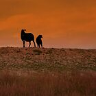 Sheep Silhouette by ienemien