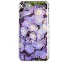 Pretty lilac hydrangea iPhone Case/Skin