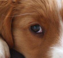 Puppy gazing at photographer Sticker