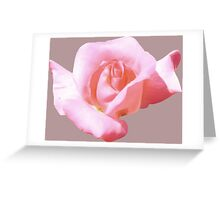 Lovely pink rose Greeting Card