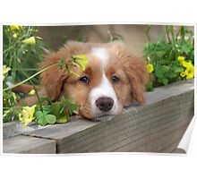 Cute puppy lying in the garden Poster