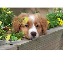 Cute puppy lying in the garden Photographic Print