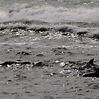 Dolphins in Glimmering Water by myraj