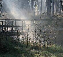 Light The Way Foggy Morning Bullocky Park by Veilstreasures