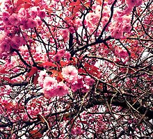 Spring Blossoms by stella999