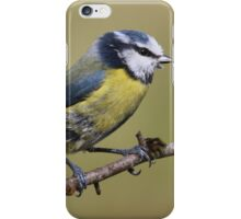 Blue Tit  --- Cyanistes Caeruleus iPhone Case/Skin