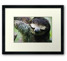 Smiling Sloth Framed Print