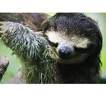 Smiling Sloth Photographic Print