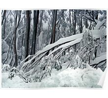 Snow weighted trees  Mt Baw Baw Poster