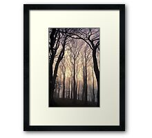 Tall Trees in Fog (silhouette) Framed Print