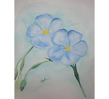 Flowers of Blue Photographic Print