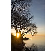On Fire - Sunrise Through The Willows Photographic Print