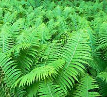 fern by peterwey