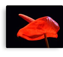Red... Canvas Print