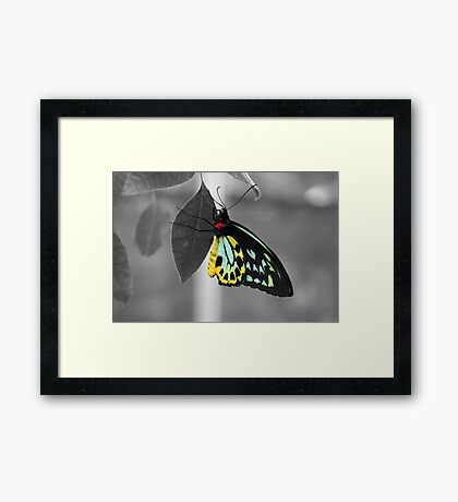 Coloured Butterfly Framed Print