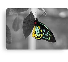 Coloured Butterfly Canvas Print