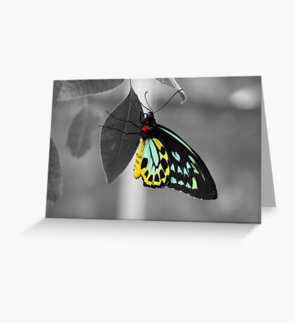 Coloured Butterfly Greeting Card