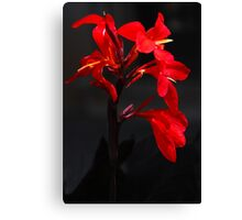 All Around Red Canvas Print