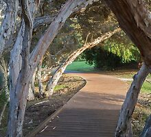 Augusta River Walk, Western Australia by Elaine Teague