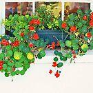 Floral Design by raptornurse