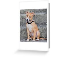 Young American Staffordshire Bull Terrier Greeting Card