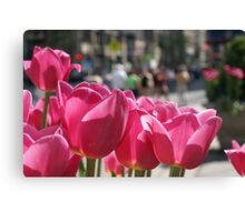 Tulips in the city. Canvas Print